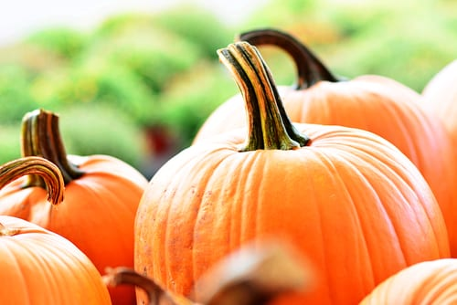 Looking for a Pumpkin Patch?