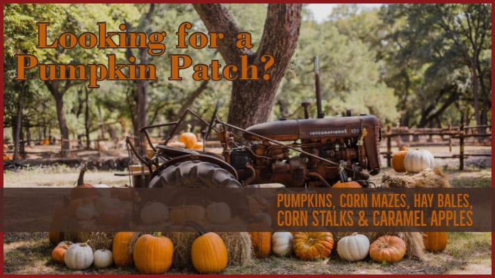 Looking for a Pumpkin Patch? We Can Help!